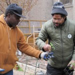 Expert gardeners manage Carrie McCracken TRUCE garden in Harlem